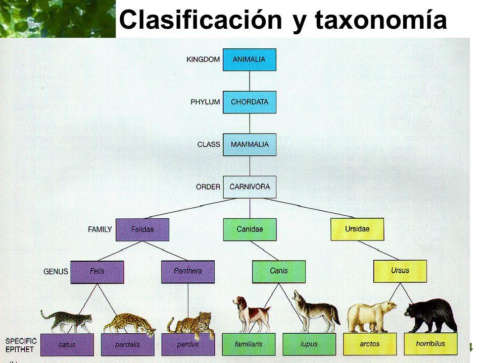 Clasificación y taxonomía