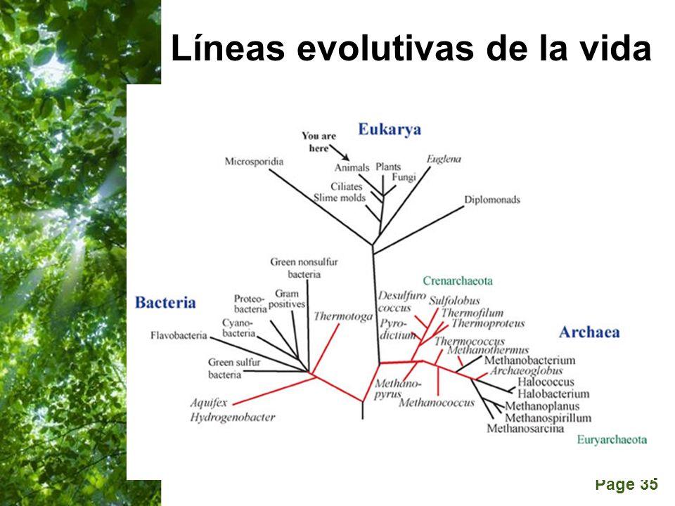 Líneas evolutivas de la vida