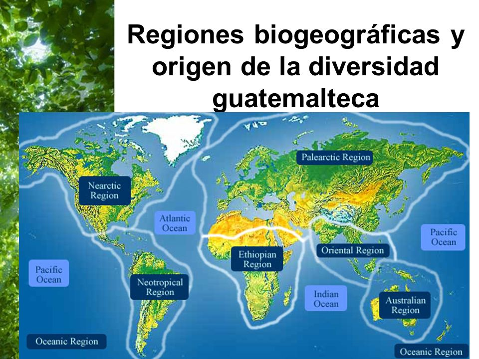 Regiones biogeográficas y origen de la diversidad guatemalteca