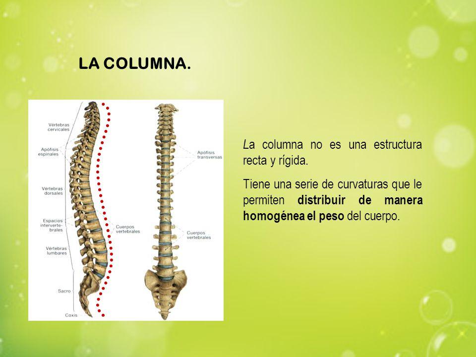 LA COLUMNA. La columna no es una estructura recta y rígida.