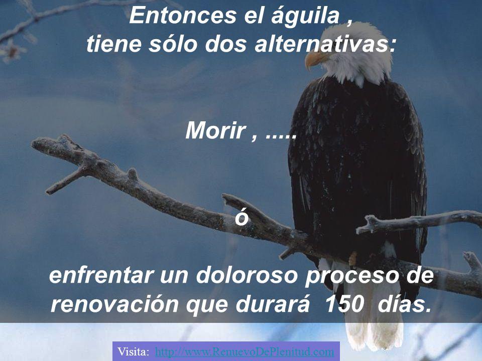 Entonces el águila , tiene sólo dos alternativas: