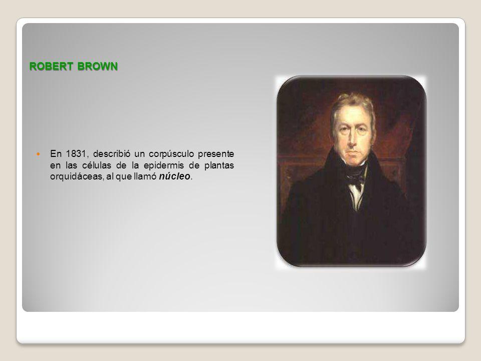 ROBERT BROWN En 1831, describió un corpúsculo presente en las células de la epidermis de plantas orquidáceas, al que llamó núcleo.