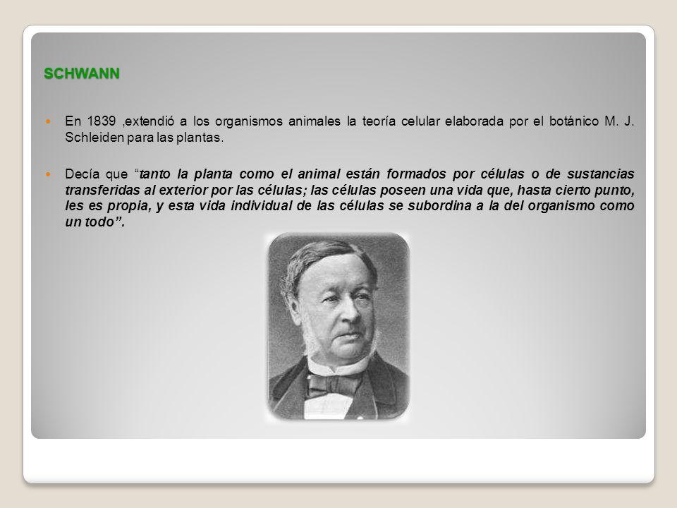 SCHWANN En 1839 ,extendió a los organismos animales la teoría celular elaborada por el botánico M. J. Schleiden para las plantas.