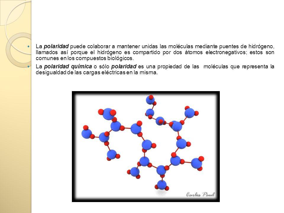 La polaridad puede colaborar a mantener unidas las moléculas mediante puentes de hidrógeno, llamados así porque el hidrógeno es compartido por dos átomos electronegativos; estos son comunes en los compuestos biológicos.