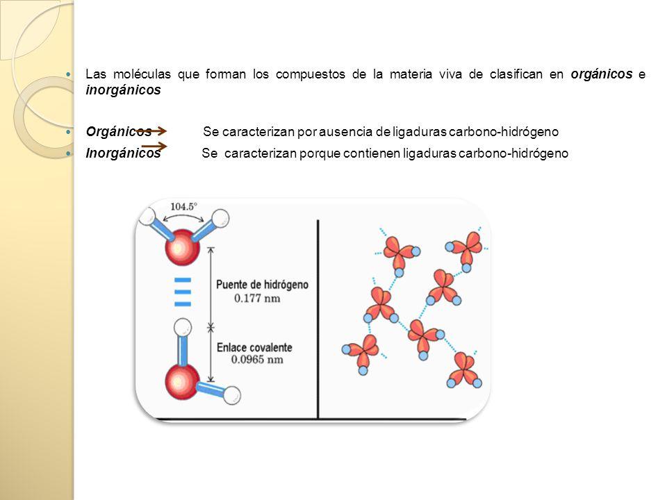 Las moléculas que forman los compuestos de la materia viva de clasifican en orgánicos e inorgánicos