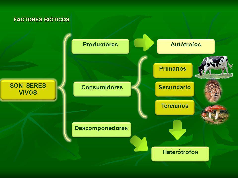 Productores Autótrofos Primarios SON SERES VIVOS Consumidores