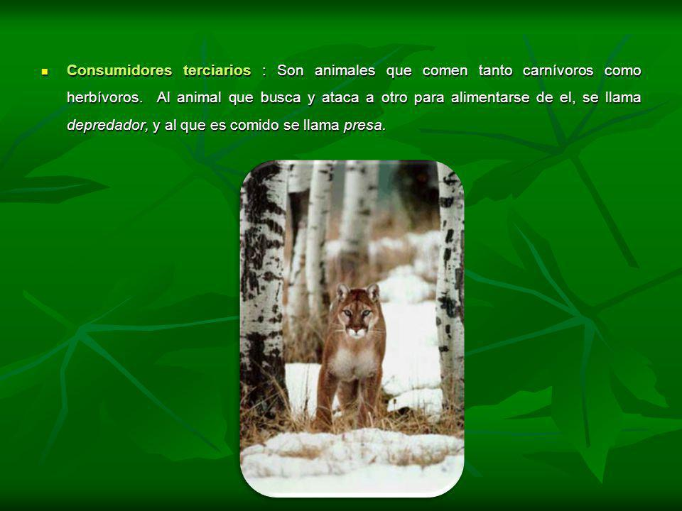 Consumidores terciarios : Son animales que comen tanto carnívoros como herbívoros.