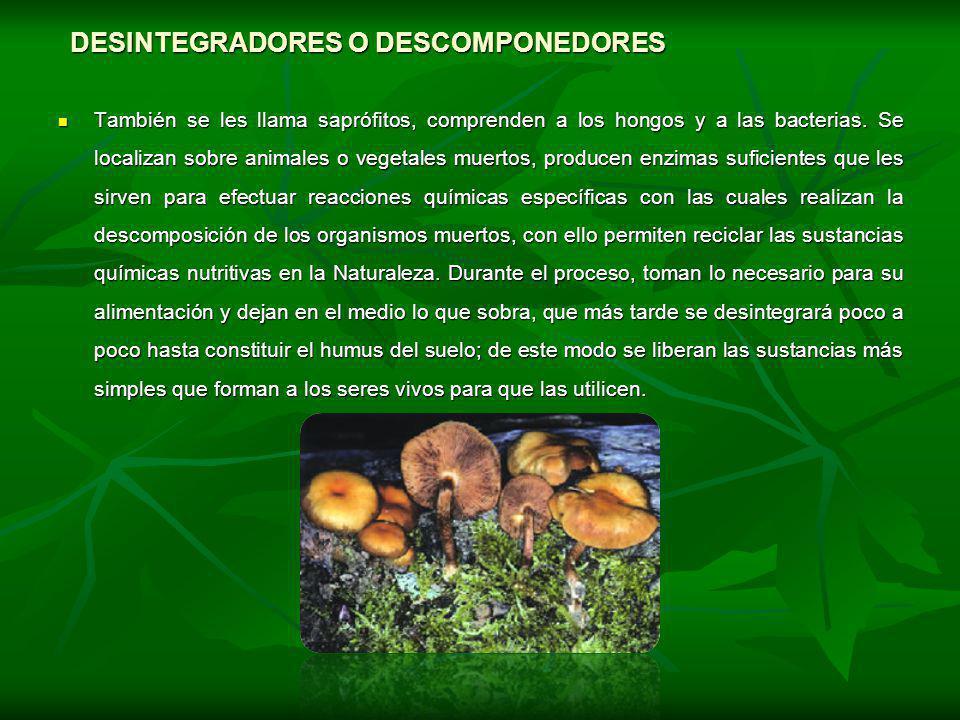 DESINTEGRADORES O DESCOMPONEDORES