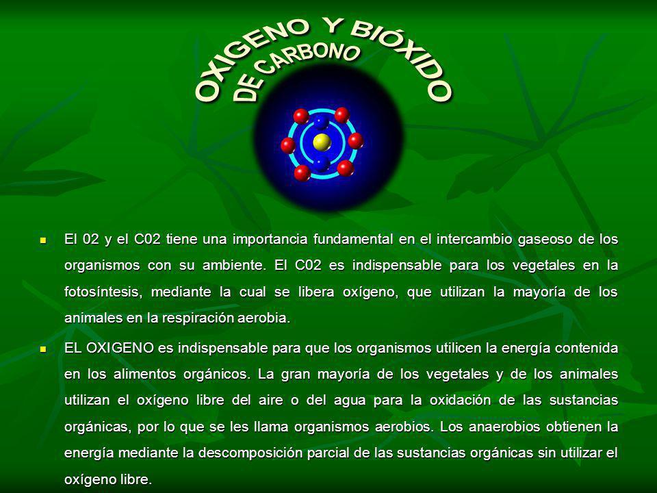 OXIGENO Y BIÓXIDO DE CARBONO