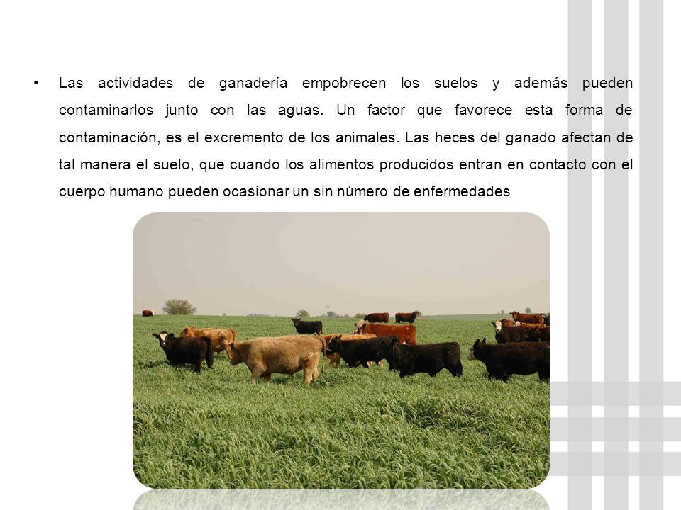 Las actividades de ganadería empobrecen los suelos y además pueden contaminarlos junto con las aguas.