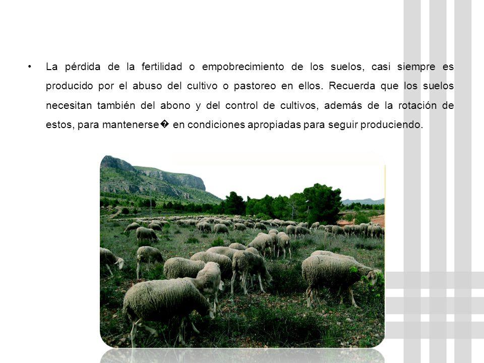 La pérdida de la fertilidad o empobrecimiento de los suelos, casi siempre es producido por el abuso del cultivo o pastoreo en ellos.
