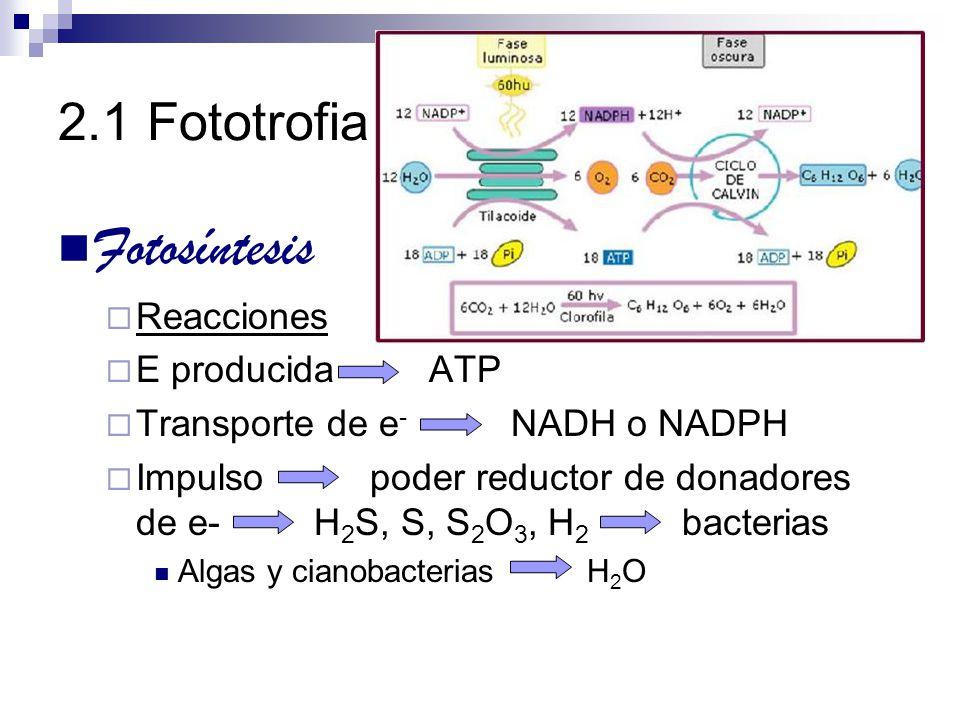 Fotosíntesis 2.1 Fototrofia Reacciones E producida ATP