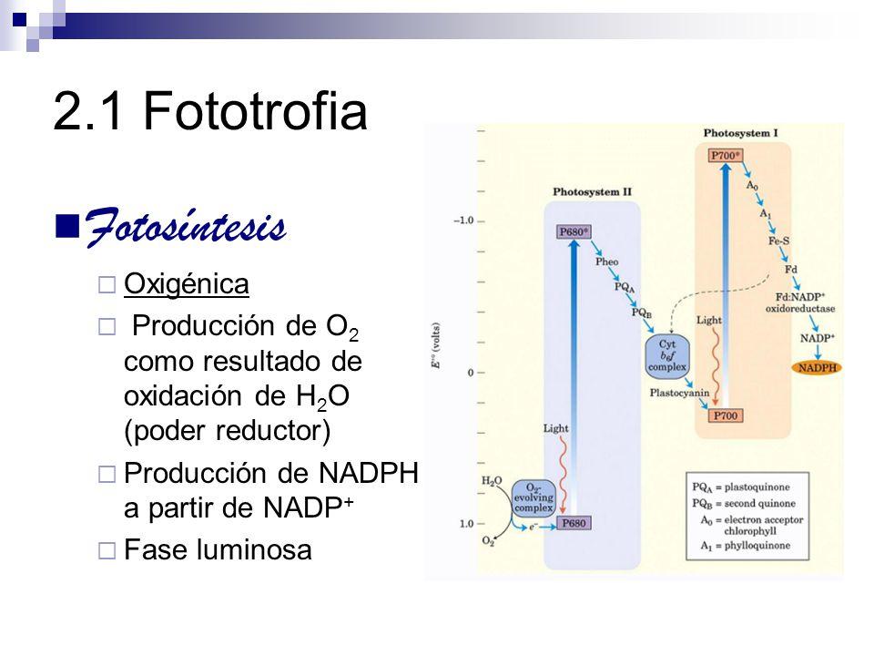 2.1 Fototrofia Fotosíntesis Oxigénica