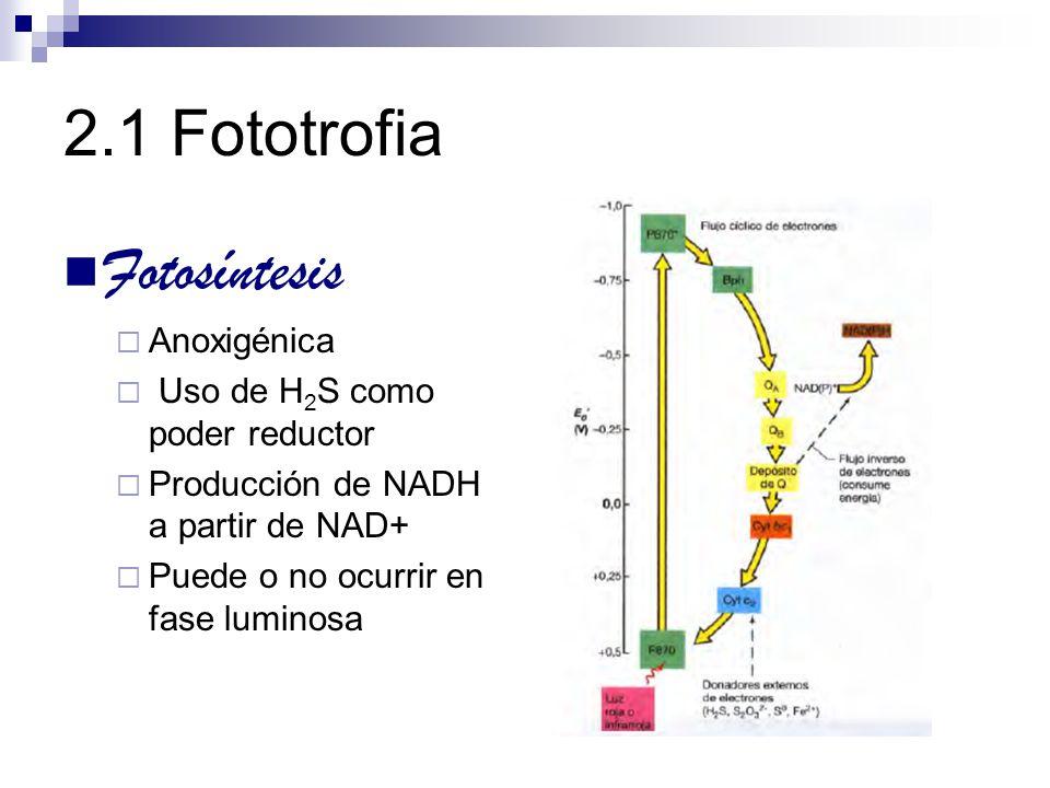 2.1 Fototrofia Fotosíntesis Anoxigénica Uso de H2S como poder reductor