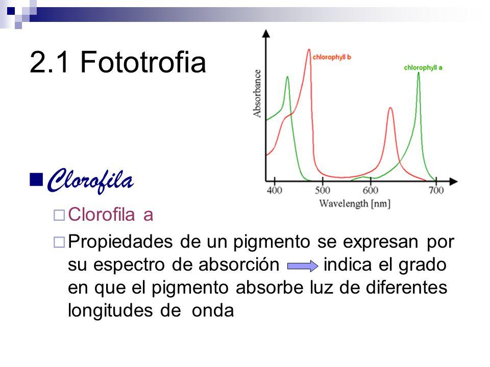 2.1 Fototrofia Clorofila Clorofila a
