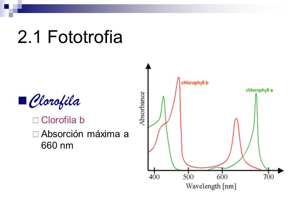 2.1 Fototrofia Clorofila Clorofila b Absorción máxima a 660 nm