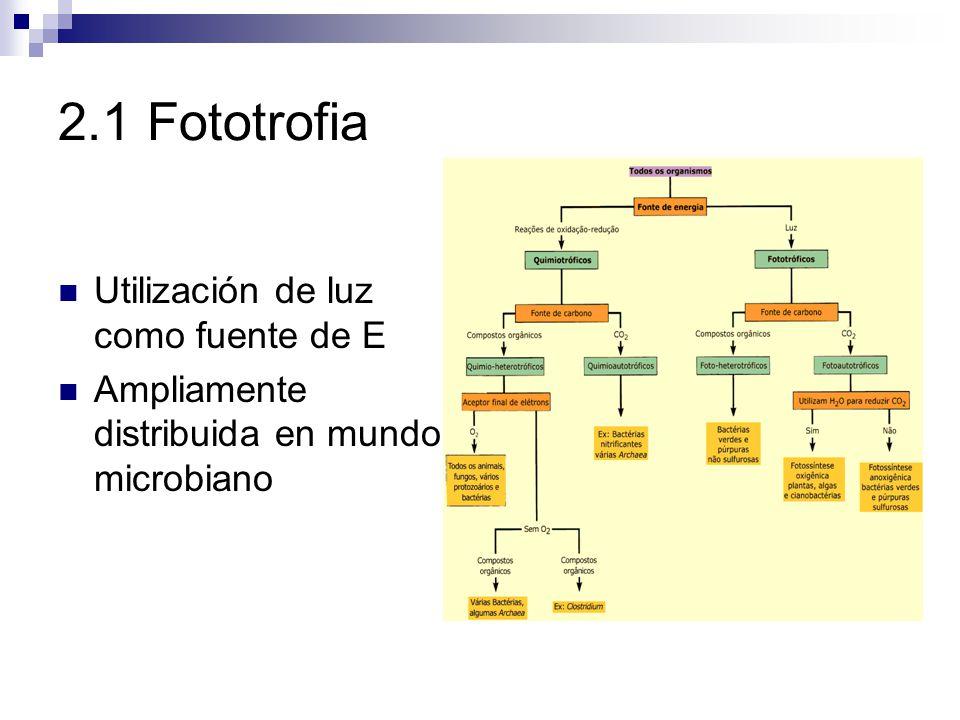 2.1 Fototrofia Utilización de luz como fuente de E