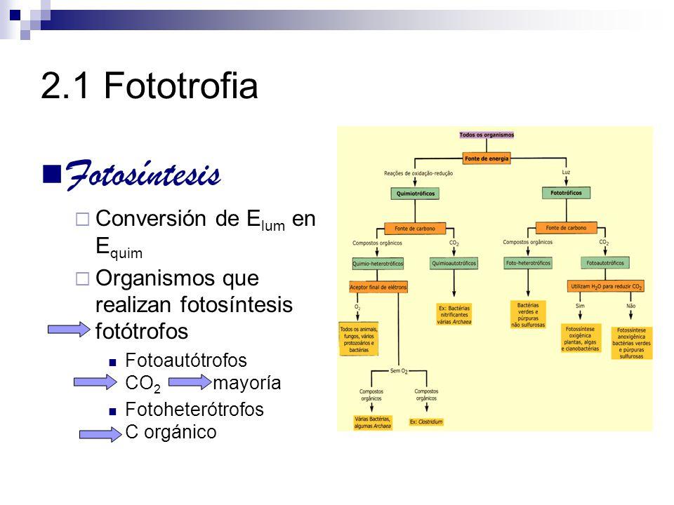 Fotosíntesis 2.1 Fototrofia Conversión de Elum en Equim