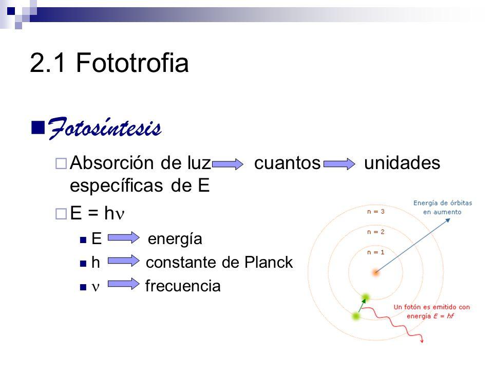Fotosíntesis 2.1 Fototrofia