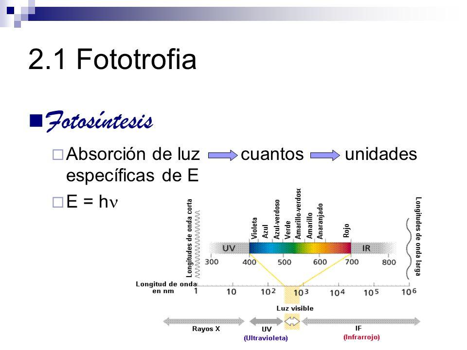 2.1 Fototrofia Fotosíntesis