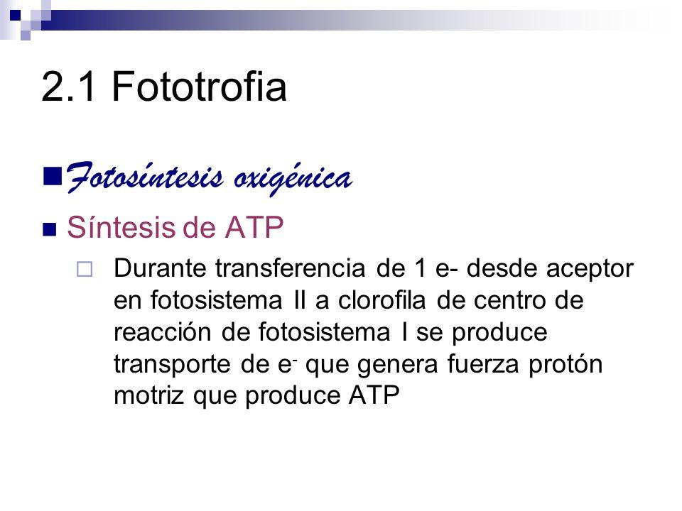 Fotosíntesis oxigénica