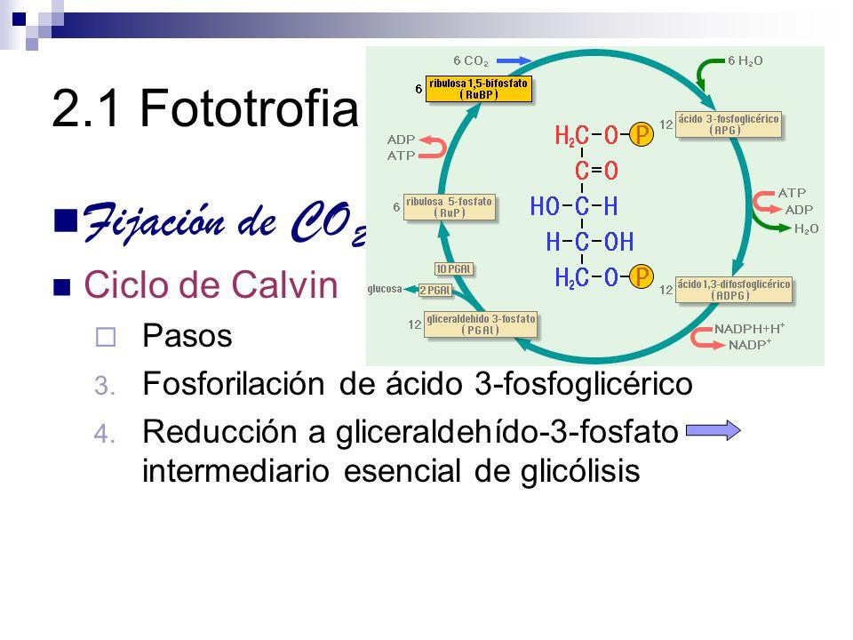 2.1 Fototrofia Fijación de CO2 Ciclo de Calvin Pasos