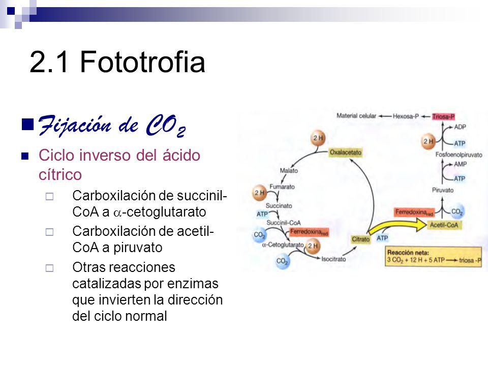 2.1 Fototrofia Fijación de CO2 Ciclo inverso del ácido cítrico