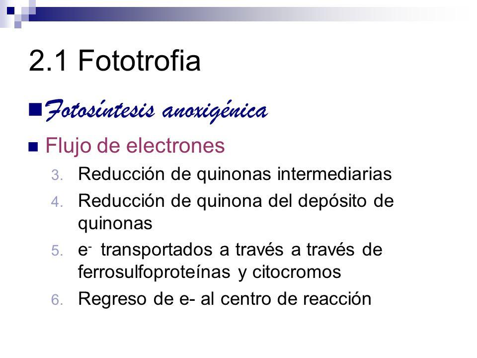Fotosíntesis anoxigénica