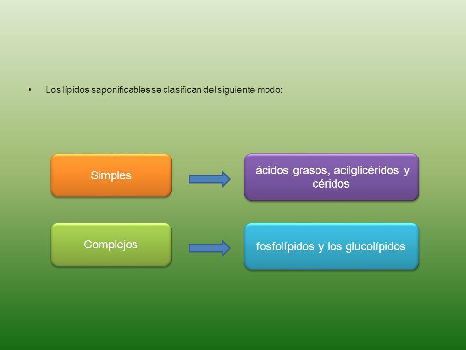 ácidos grasos, acilglicéridos y céridos