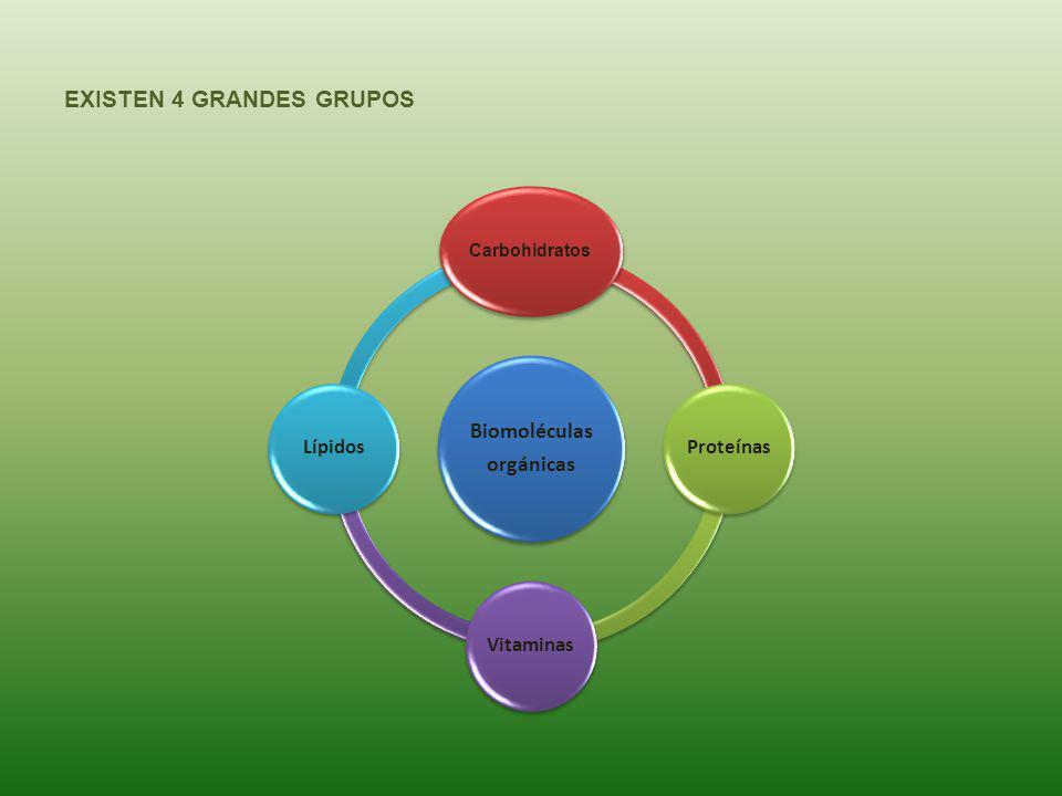 EXISTEN 4 GRANDES GRUPOS