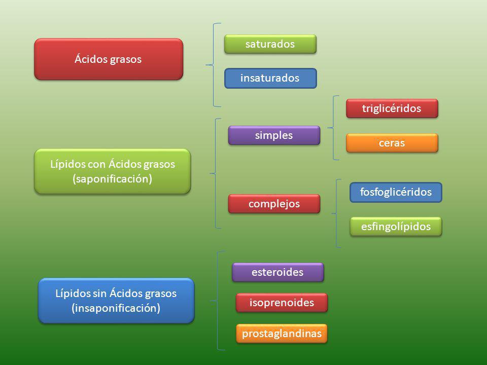Lípidos con Ácidos grasos (saponificación)