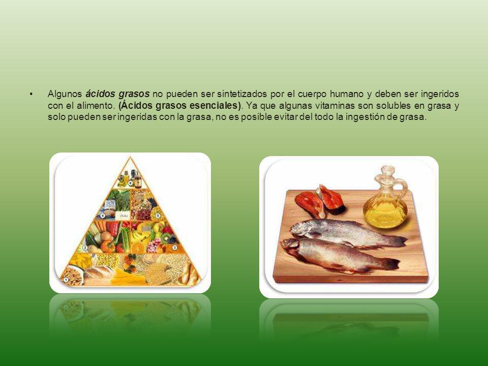 Algunos ácidos grasos no pueden ser sintetizados por el cuerpo humano y deben ser ingeridos con el alimento.
