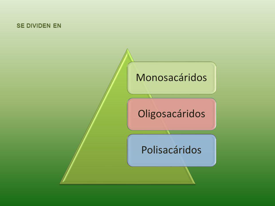 SE DIVIDEN EN Monosacáridos Oligosacáridos Polisacáridos