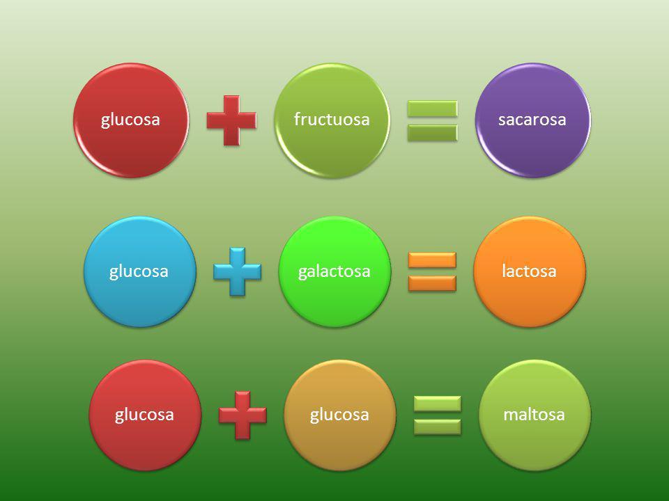 glucosa fructuosa sacarosa glucosa galactosa lactosa glucosa maltosa