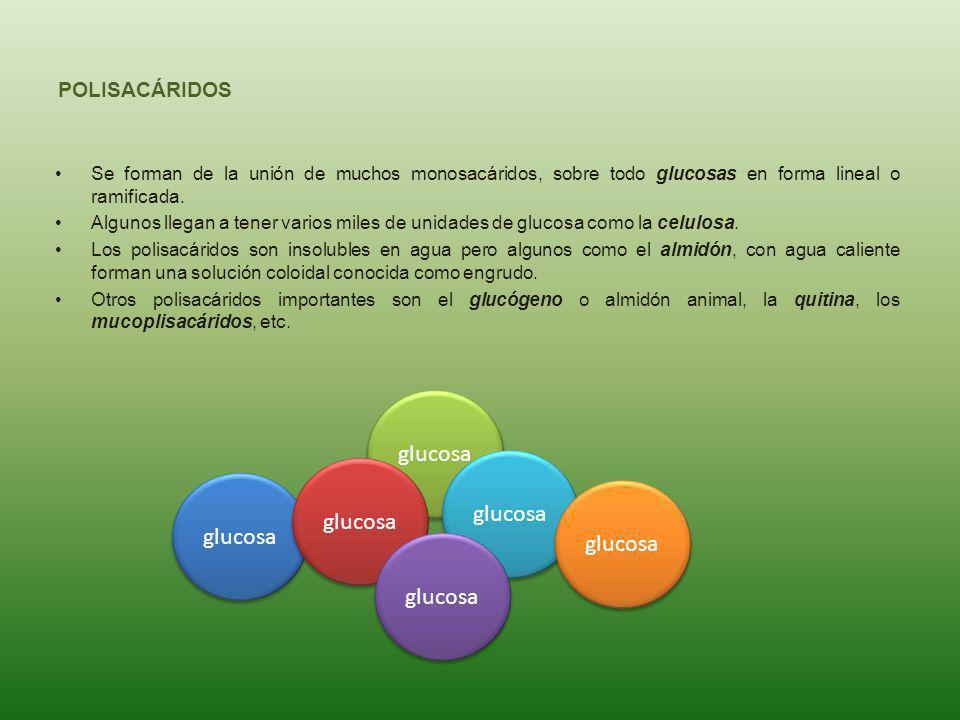 glucosa glucosa glucosa glucosa glucosa glucosa POLISACÁRIDOS