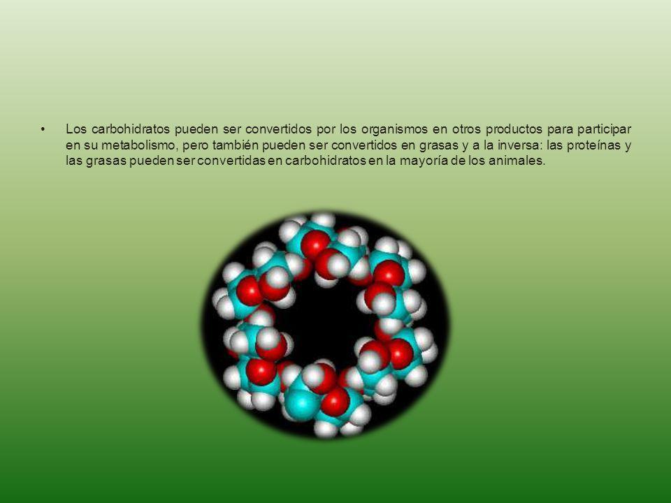 Los carbohidratos pueden ser convertidos por los organismos en otros productos para participar en su metabolismo, pero también pueden ser convertidos en grasas y a la inversa: las proteínas y las grasas pueden ser convertidas en carbohidratos en la mayoría de los animales.