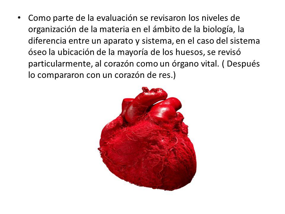 Como parte de la evaluación se revisaron los niveles de organización de la materia en el ámbito de la biología, la diferencia entre un aparato y sistema, en el caso del sistema óseo la ubicación de la mayoría de los huesos, se revisó particularmente, al corazón como un órgano vital.