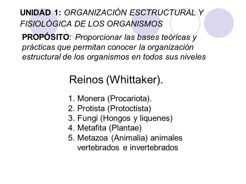 UNIDAD 1: ORGANIZACIÓN ESCTRUCTURAL Y FISIOLÓGICA DE LOS ORGANISMOS