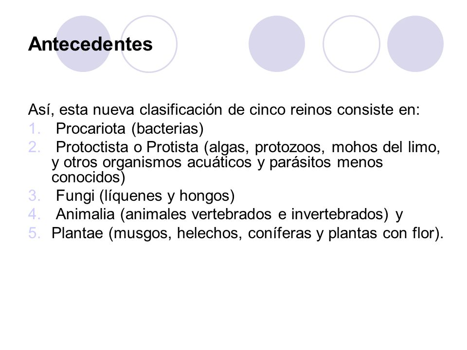 Antecedentes Así, esta nueva clasificación de cinco reinos consiste en: Procariota (bacterias)