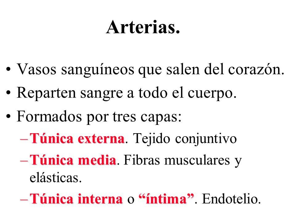 Arterias. Vasos sanguíneos que salen del corazón.