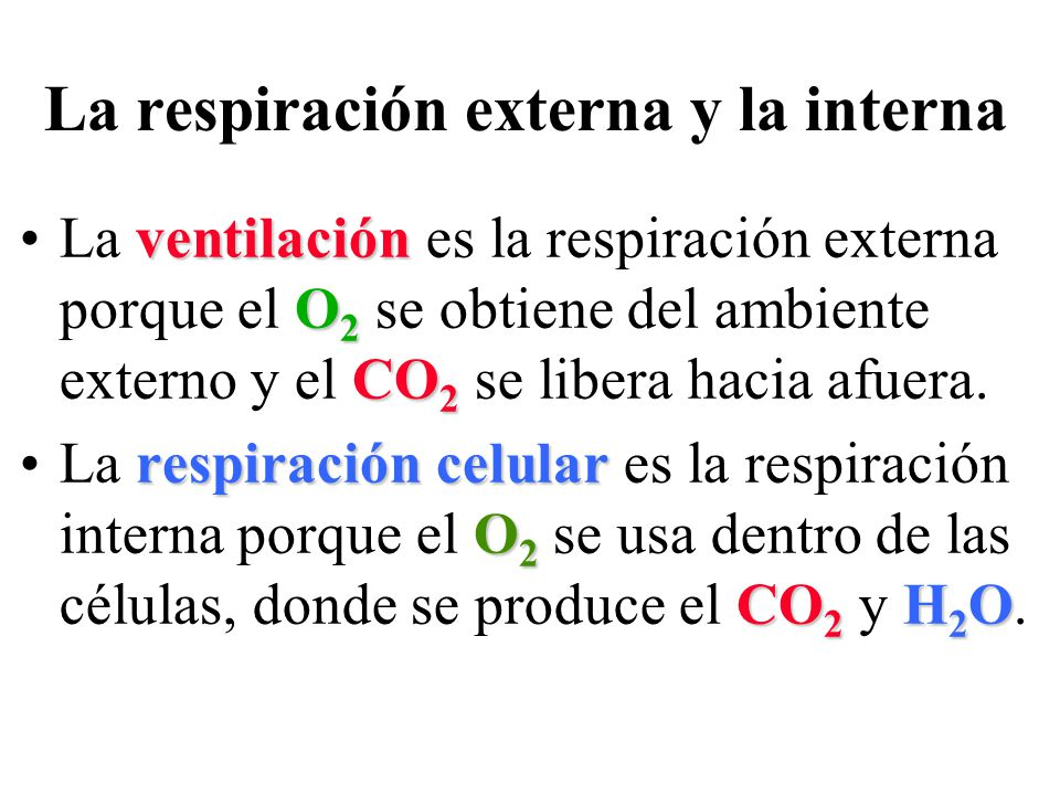 La respiración externa y la interna