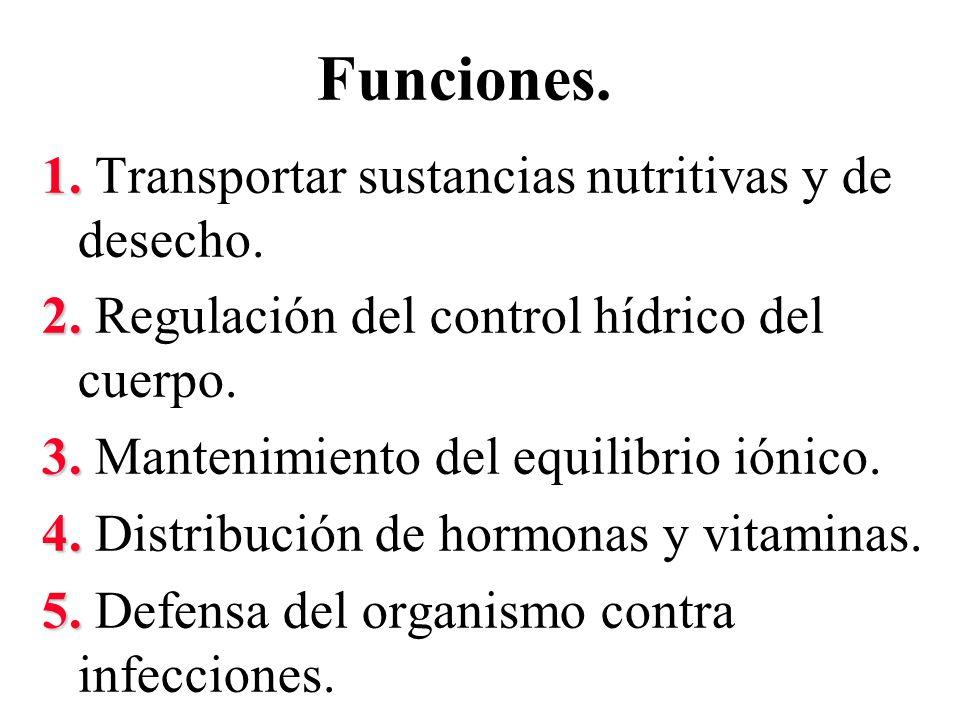 Funciones. 1. Transportar sustancias nutritivas y de desecho.