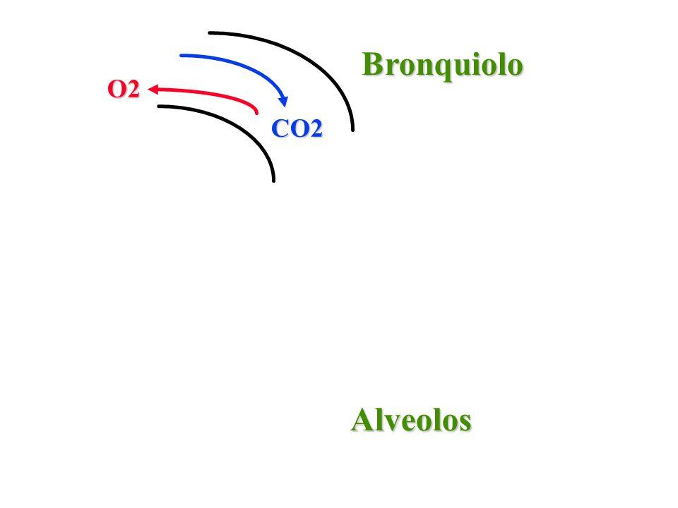 Bronquiolo O2 CO2 Alveolos
