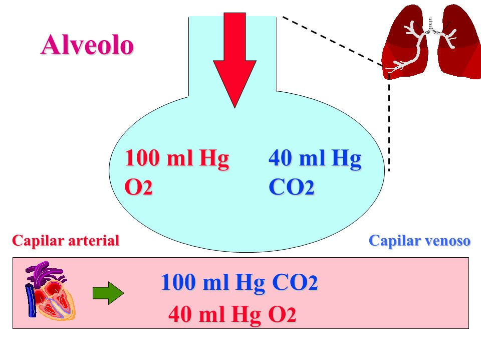 Alveolo 100 ml Hg O2 40 ml Hg CO2 100 ml Hg CO2 40 ml Hg O2