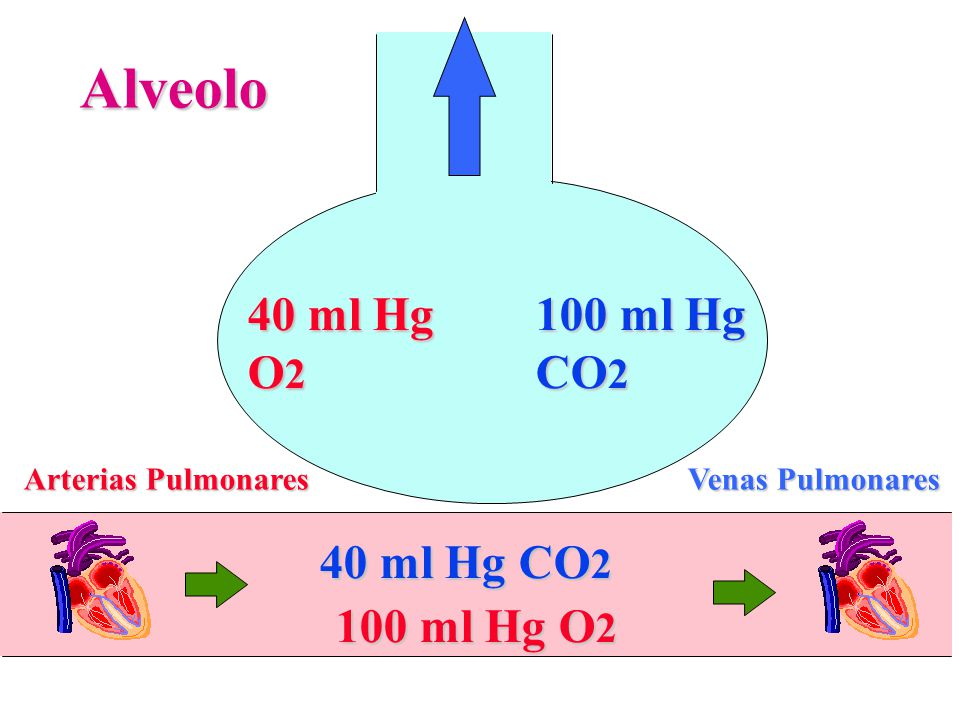Alveolo 40 ml Hg O2 100 ml Hg CO2 40 ml Hg CO2 100 ml Hg O2
