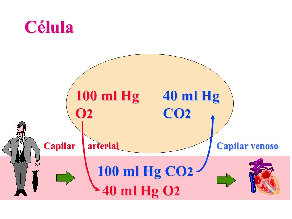 Célula 100 ml Hg O2 40 ml Hg CO2 100 ml Hg CO2 40 ml Hg O2