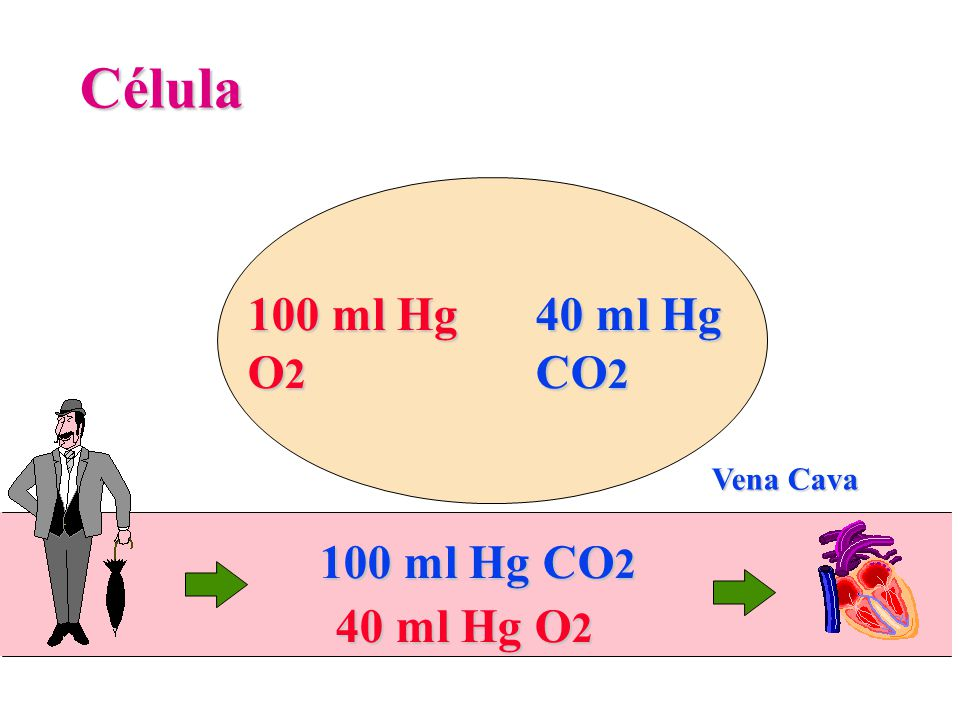 Célula 100 ml Hg O2 40 ml Hg CO2 Vena Cava 100 ml Hg CO2 40 ml Hg O2