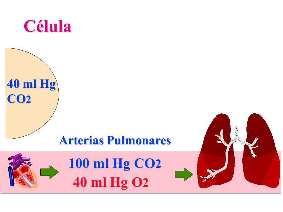 Célula 40 ml Hg CO2 Arterias Pulmonares 100 ml Hg CO2 40 ml Hg O2