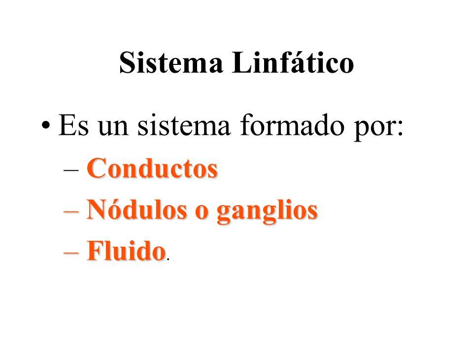 Es un sistema formado por: