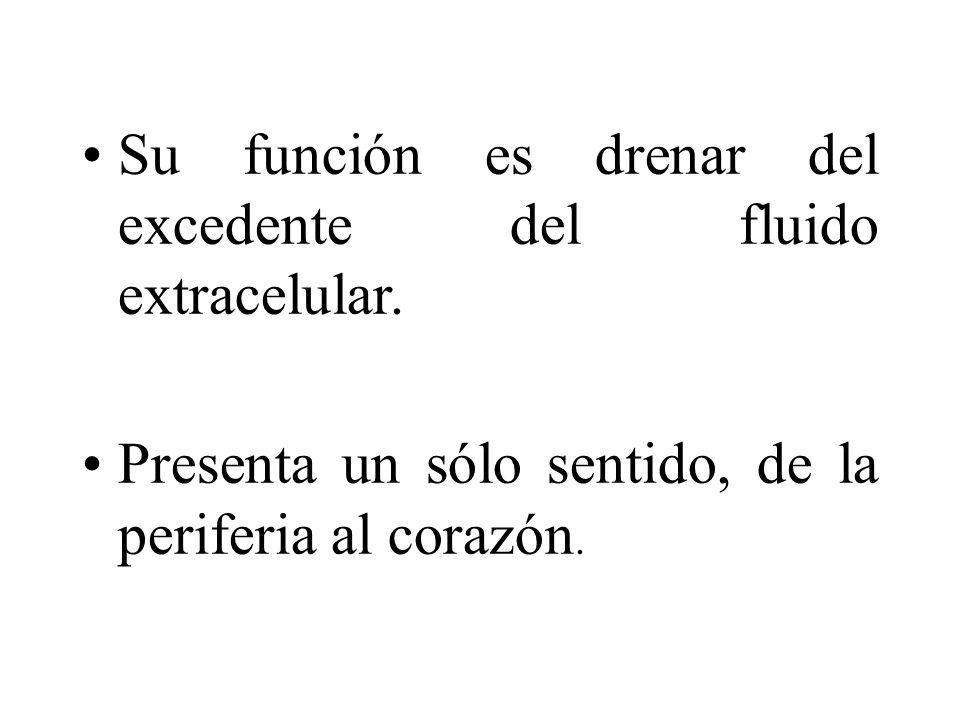 Su función es drenar del excedente del fluido extracelular.
